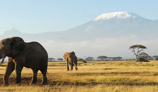 Amboseli 3 Days 2 Nights Safari Deals